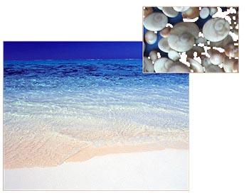 oeil de sainte lucie sur la plage